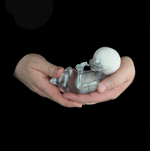 surgical training fetus