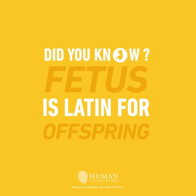 Fetus Offspring